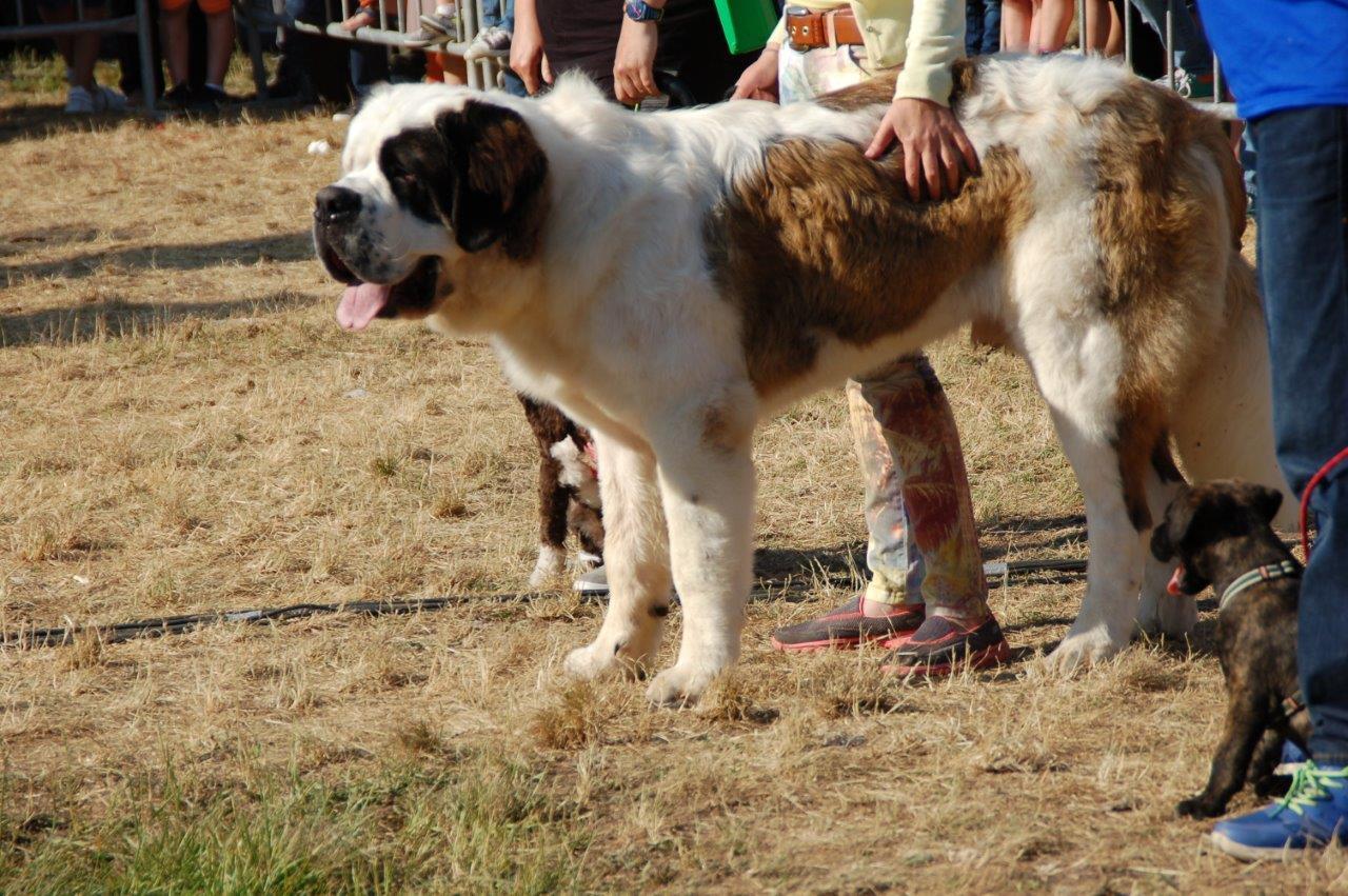 Feiras da Primavera no Páramo: Os Cans