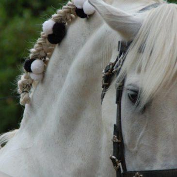 Feiras da Primavera: Os Cabalos